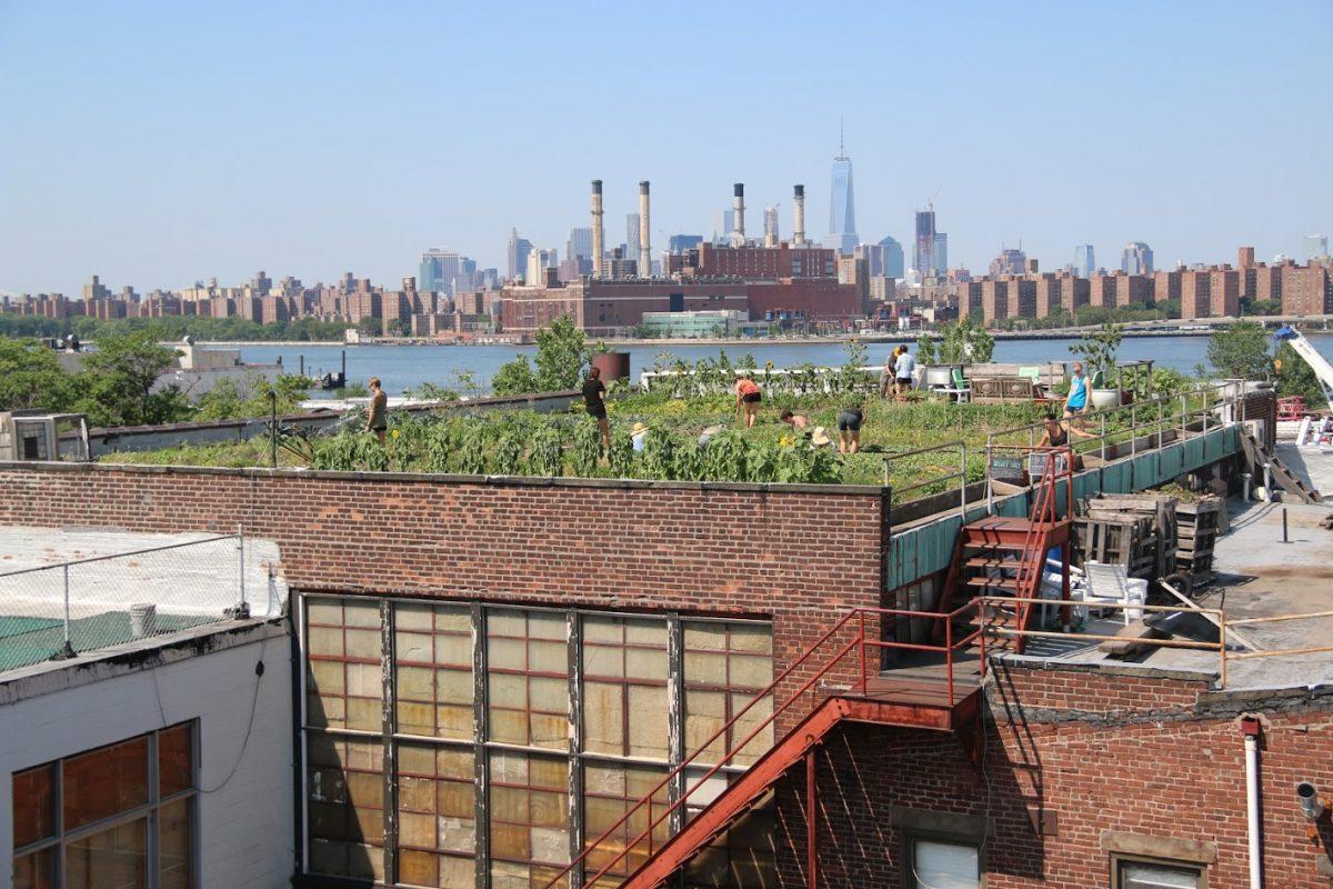 Charlamos con  Annie Novak, pionera de los huertos urbanos en las azoteas de Nueva York