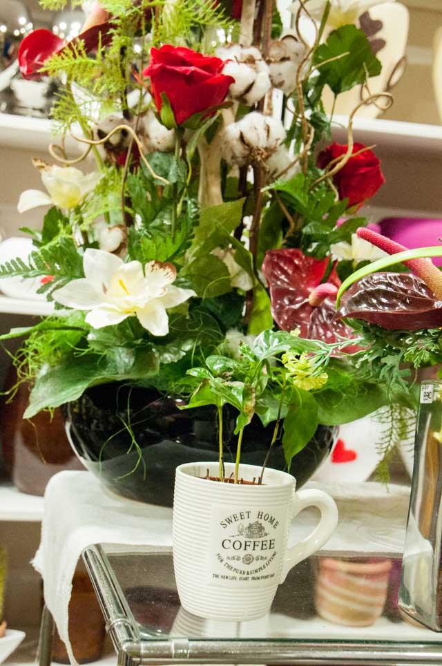 Flores Kentia Delicias