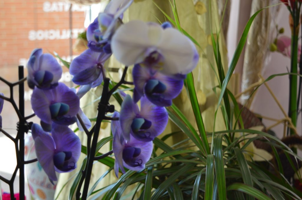 Flores Valdespartera