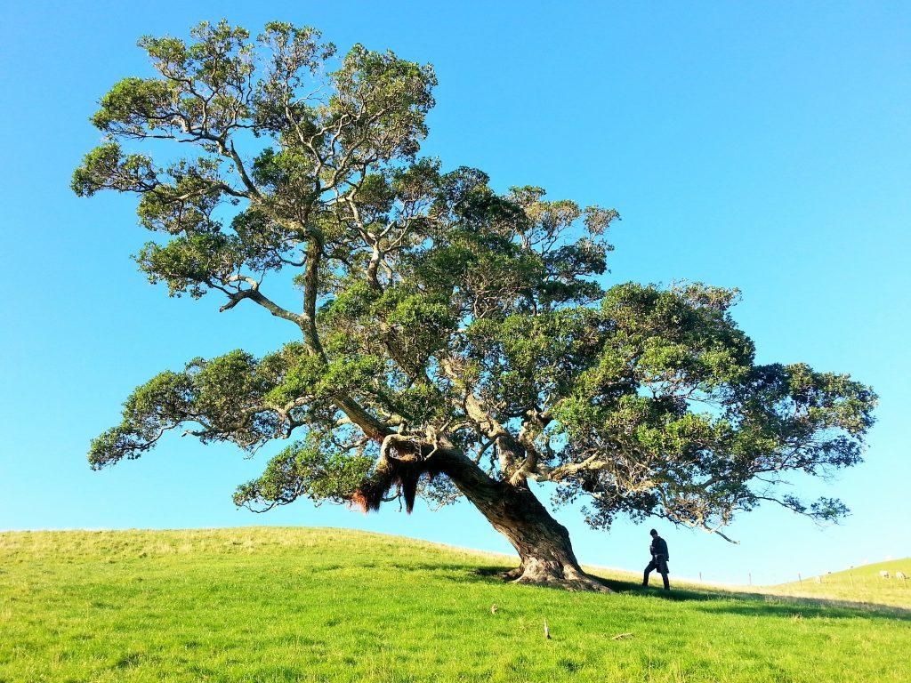Planta tu árbol de referentes creativos